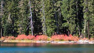 Foliage Lower Twin Lake