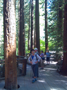 Hikers in the Redwood Section