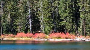 Foliage Lower Twin Lake
