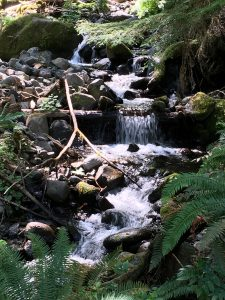Stream from Waterfall