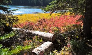 Colorful Ground Cover – Upper Twin Lake
