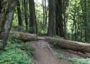 Stepping thru the Tree Trunk