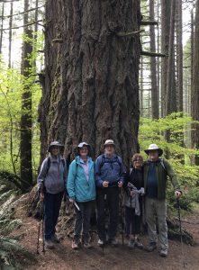 Hikers in Front of Huge Tree
