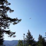 Osprey and Nest – Cape Corn